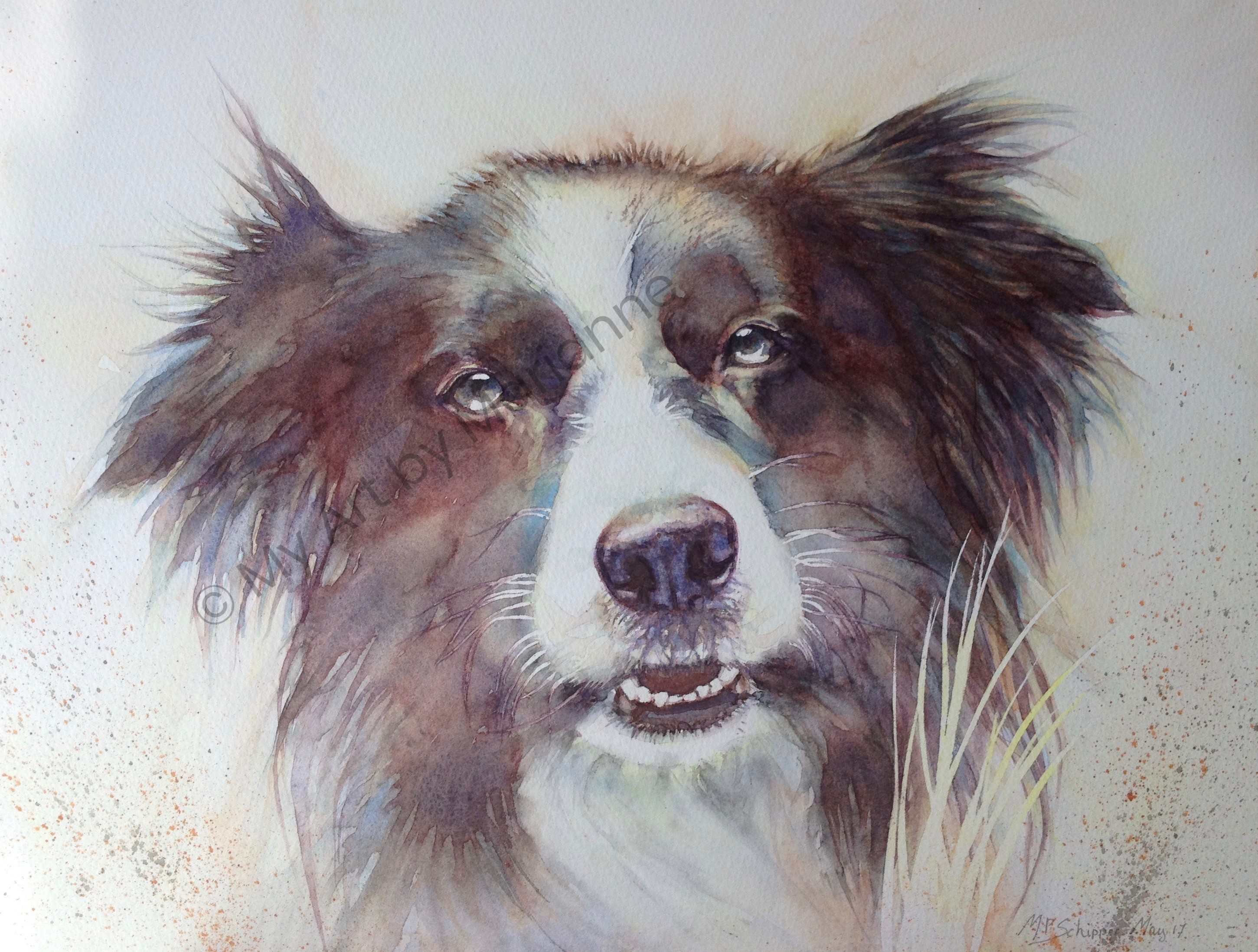 Collie by Marianne